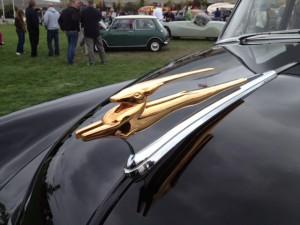Golden Gazelle hood ornament on a 1951 Chevrolet (photo: Gene Stout)
