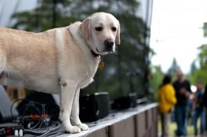 Steve Martin's dog Wally (photo: Jim Bennett)